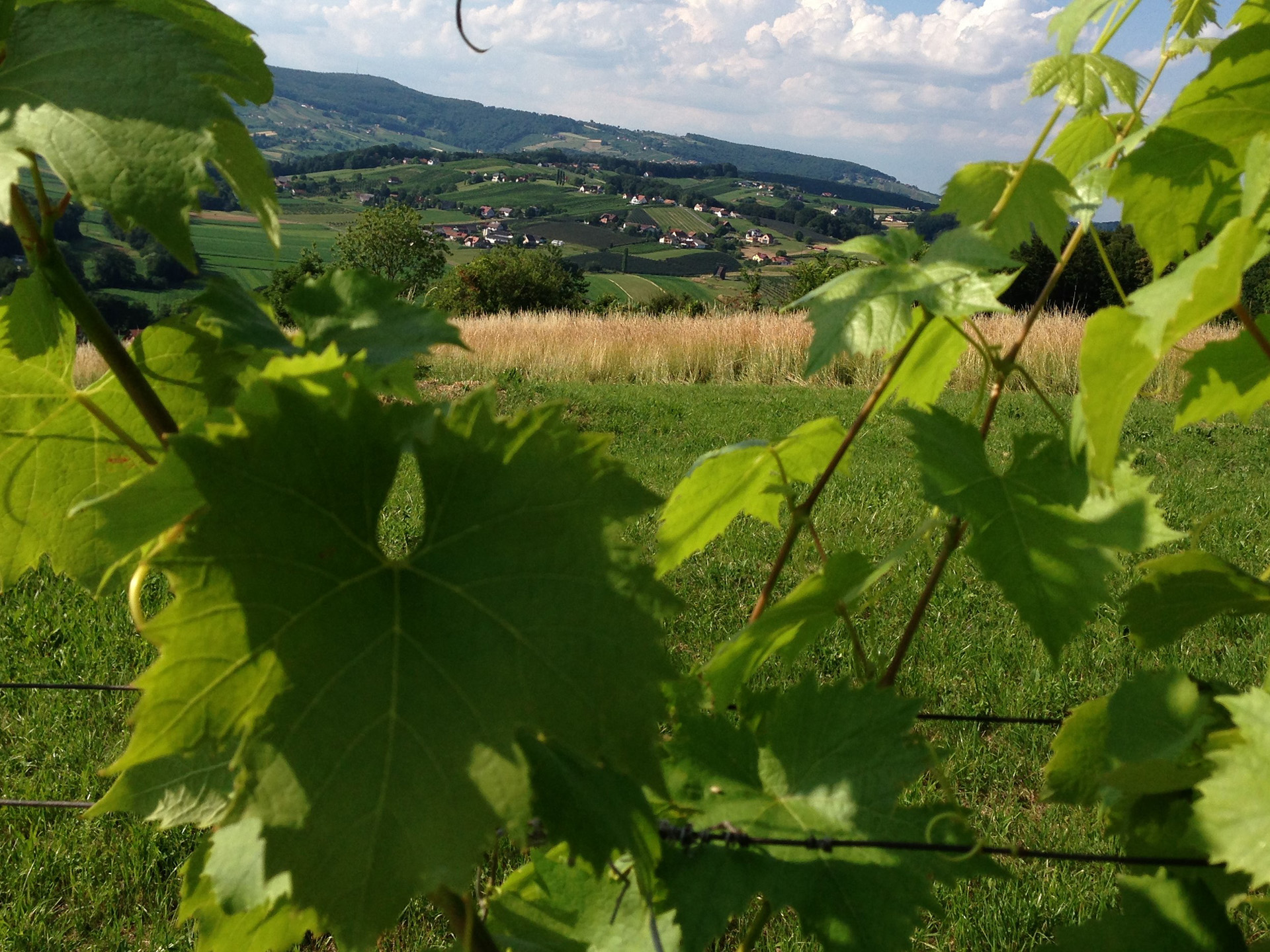 Weinberge in der Südoststeiermark