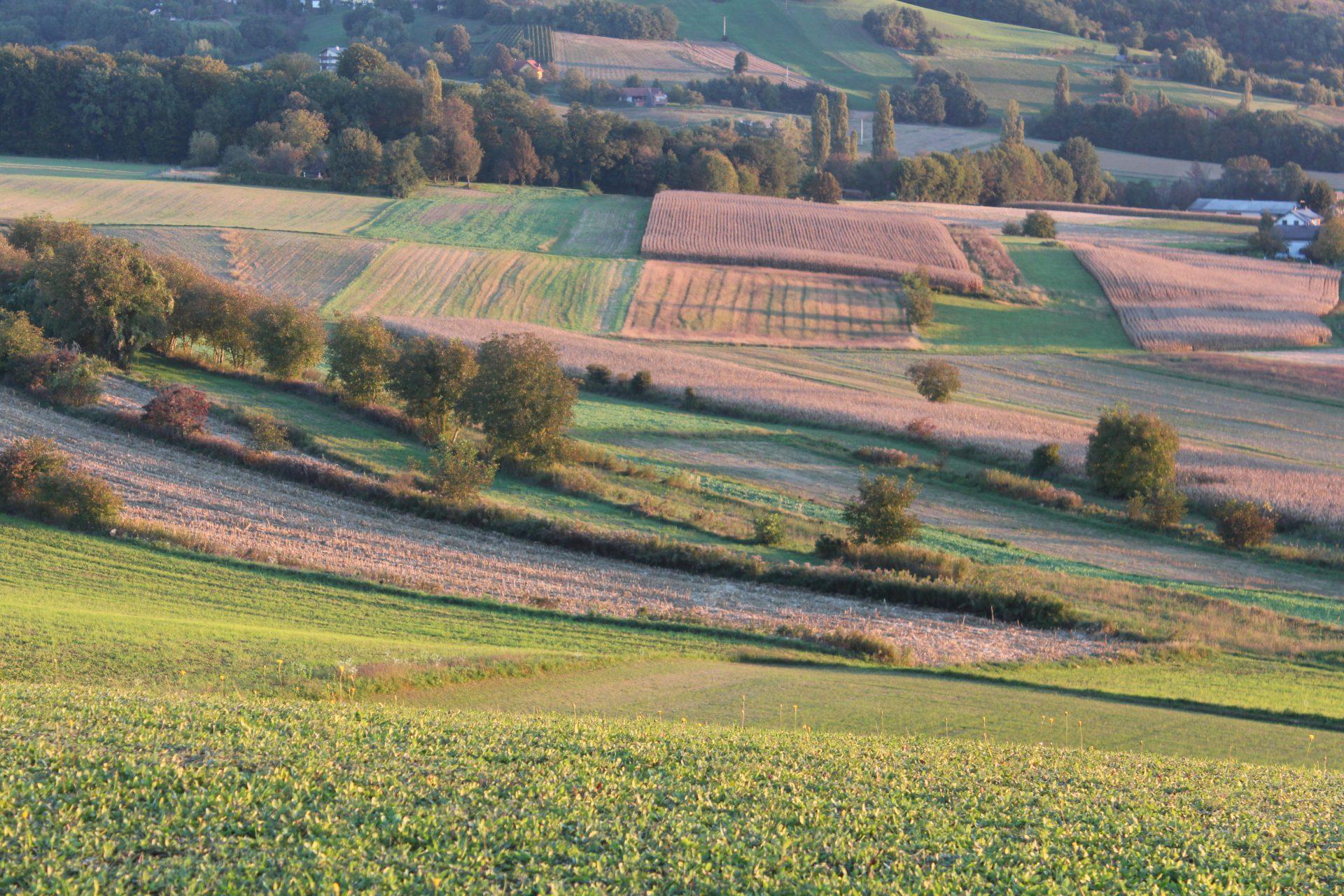 Herbstfelder im Morgentau