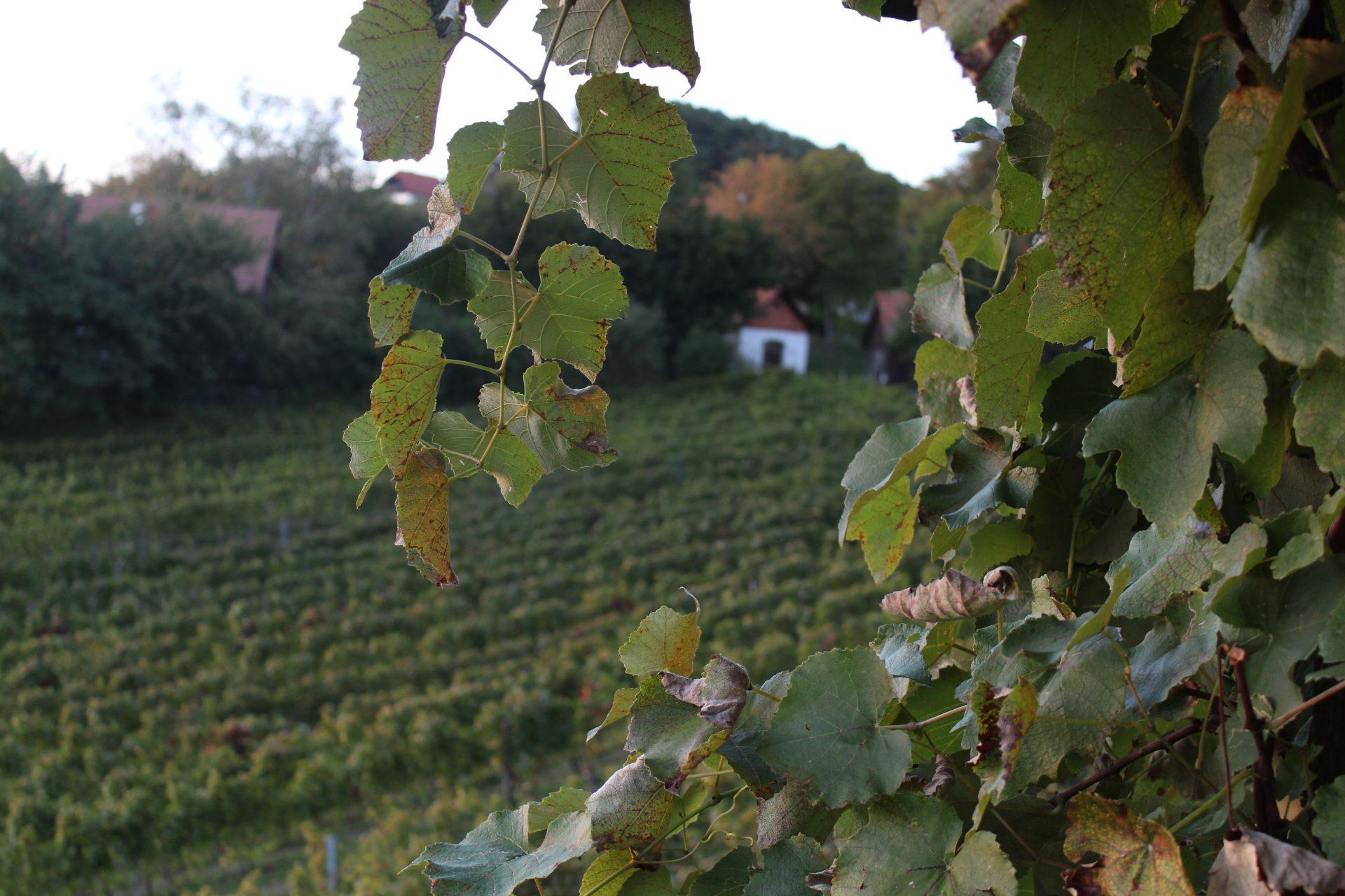 Kapelle im Weingarten